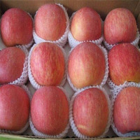 Fresh Apple Fruit For Sale Wholesale