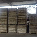 Acacia sawn timber - acacia wood - Acacia timber making pallet selecting well