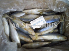Well/known Frozen Indian Mackerel Fish seafood Supplier Pakistan