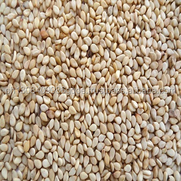 International Price of white Sesame Seed