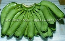 Plantain Banana for sale