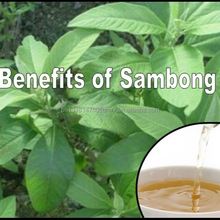 Cancer Fighting Medicinal Herb Tea