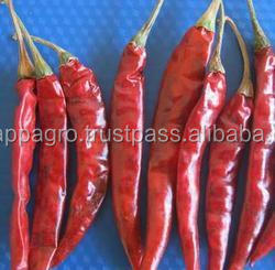 Best Quality Teja Red Chillies at affordable price