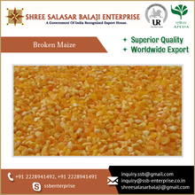 Broken Corn Chicken Feed Available at Export Market Price