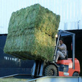 Alfalfa Double Compressed Big Bales