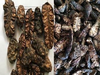 Dried Fruits of Morinda Citrifolia from Viet Nam / Noni Fruits Dried / Morinda