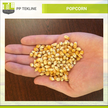 Best Selling Yellow Popcorn at Best Price