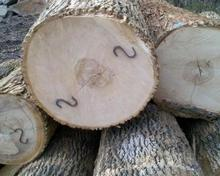 Ash logs for sale now 100% pure Grades