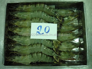 Frozen HOSO Black Tiger Shrimp