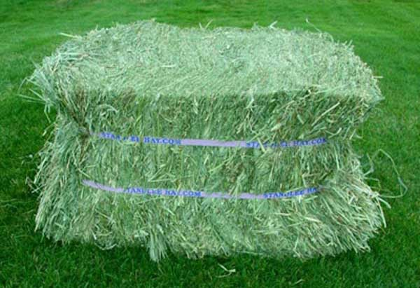 High Quality Alfalfa Hay, Alfalfa Hay, Alfalfa Hay Bales for sale