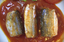 canned mackerel in tomato sauce/brine/oil