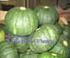 vietnam Fresh Pumpkin cheap