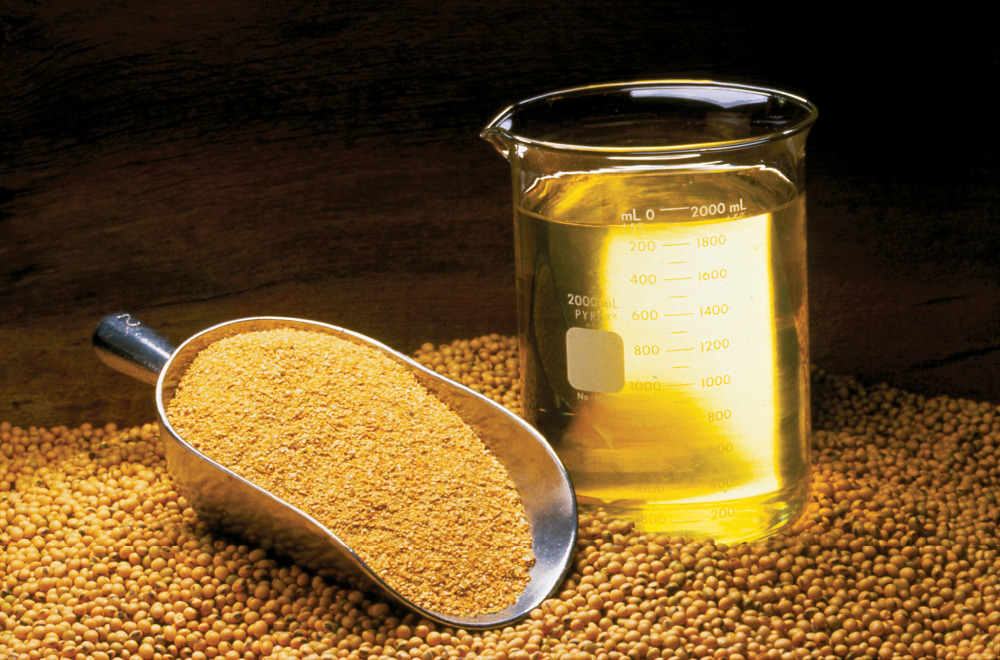 Soybean feed