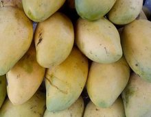 High quality Fresh Sweet Mango from VietNam