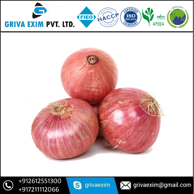 High Quality Best Onion Indian Exporter