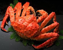 Live Red King Crab / Fresh And Frozen King /Crab|