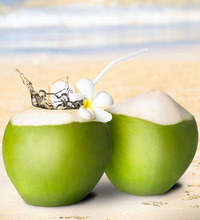 High Quaity Cheap tender coconut export from Vietnam to Dubai and Russia