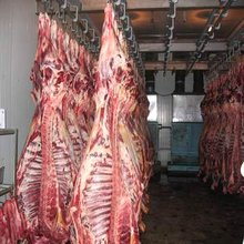 Frozen Halal Goat Meat, Lamb Meat, Sheep Meat, Beef