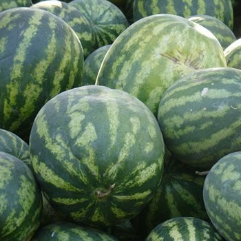 Best Quality Water Melon Seeds & Fresh Melon