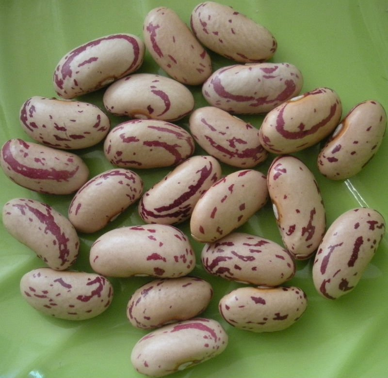 Sugar Beans, White Speckled Beans Kidney Beans