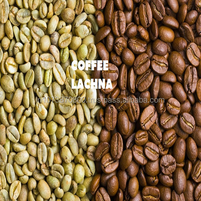 50 KG Bag Indian Origin Ground Green coffee Arabica Unroasted coffee beans seller from INDIA