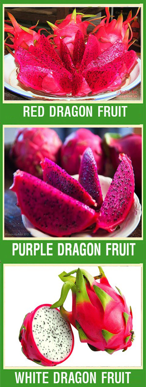 SUPPLIER (THEBESTFOODS.VN) OFFER ORGANIC WHITE PITAHAYA/ DRAGON FRUIT PREMIUM QUALITY
