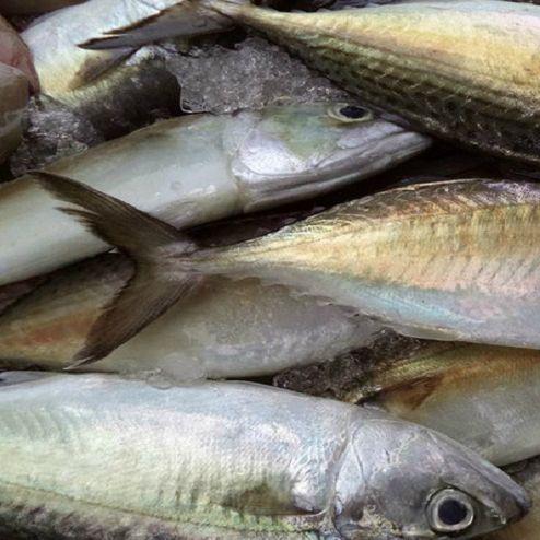 Hot! Best wholesale cheap seafood frozen fresh pacific mackerel fish whole round