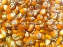 Animal Feed Yellow Corn / yellow corn animal feed / cheap Yellow Corn maise