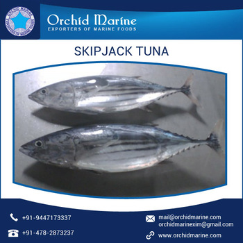 Health Beneficial Whole Round Skipjack Tuna/ Sea Food Available for Bulk Purchase