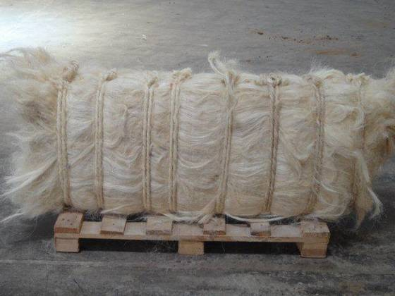 NATURAL WHITE SISAL FIBRE /SISAL FIBER FOR GYSUM ROPE FOR SALE HOT SELL!!