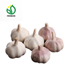 /product-detail/2019-fresh-white-garlic-for-indonesia-and-thailand-market-62006742144.html