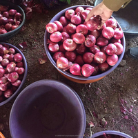 Fresh Red Onion For Export