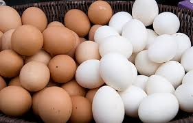 White and Brown Chicken Eggs, Fresh Table Eggs/Farm Fresh Chicken Eggs