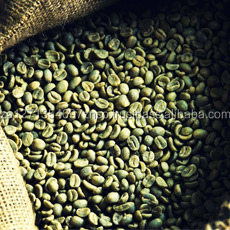 SA factory price excellent quality grade robusta green coffee beans
