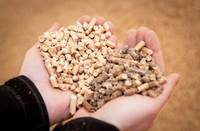 Premium Grade Oak, Spruce, fir Wood Pellets For Heating Stystem 15kg bags