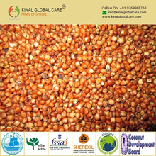 High Quality Red Sorghum From India