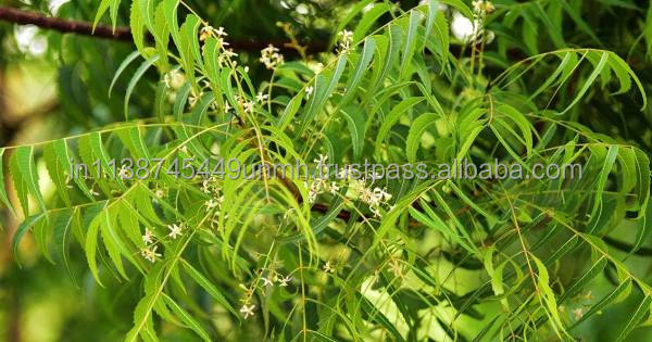 NEEM OIL FAST DELIVERY ECONOMICAL PRICE