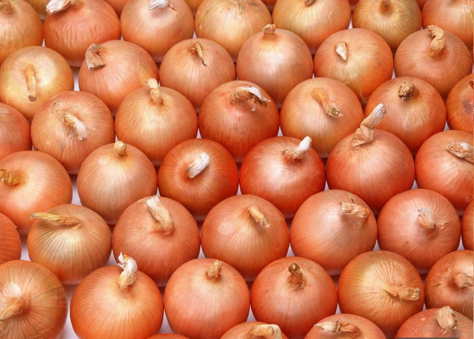 fresh Onions/Red shallot onion/wholesale fresh onion