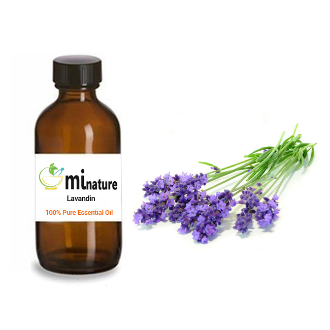 Pure, Organic, Natural Lavandin Essential Oil at Wholesale Price