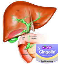 HOT 2017!! BEST LIVER PRODUCT/ALCOHOLIC FATTY LIVER TREATMENT GINGOLIN CAP BY KDN BIOTECH PVT LTD., PANIPAT, INDIA