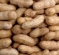 Peanut in shell&kernels China Good quality