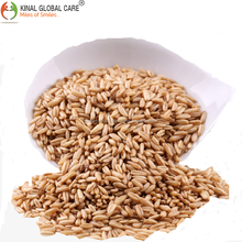 Hot Sale High Quality Wheat From India