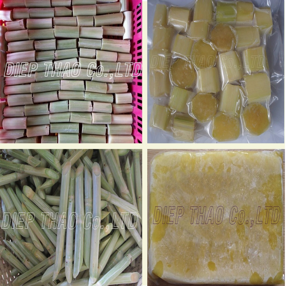 SUPPLY FRESH/FROZEN/JUICE SUGAR CANE FROM VIETNAM