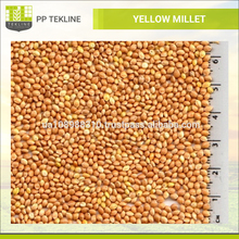 High Quality Ukraine Yellow Millet Price