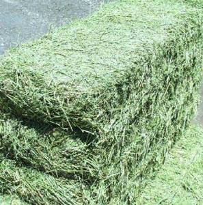 Grade A Quality Alfalfa and Lucerne Hay For Sale