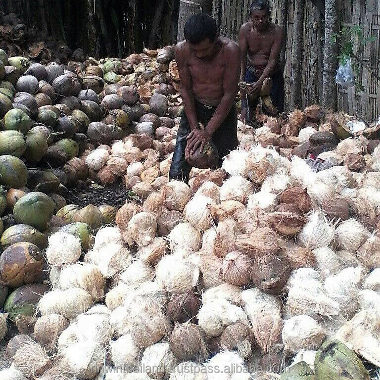 Matured Semi-Husked Coconut/ Fresh Coconut from Indonesia