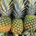 MD2 FRESH PINEAPPLES / +84984418844 whatsapp