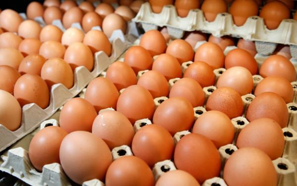 FRESH CHICKEN EGGS WITH COMPETITIVE PRICES