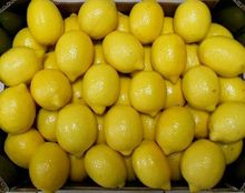 Fresh Lemon / Fresh Citrus Fruit