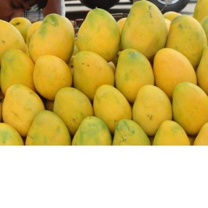 Premium Mango from Pakistan - Delicious Taste (Sindhri Mango) for sale